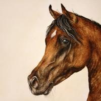 Arab häst