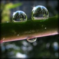 Livet i en bubbla