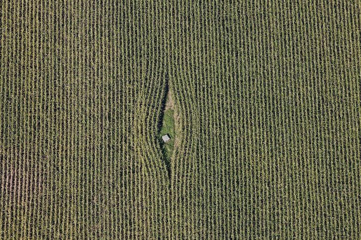 Luftaufnahme von einem Kanaldeckel im Maisfeld